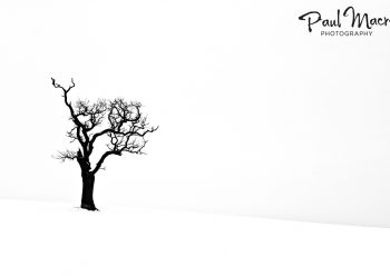 Isolated Snowy Tree